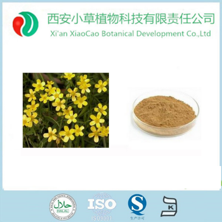 Natural plant extract Cat's Claw Extract/Ranunculus ternatus Thunb