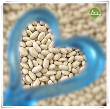 JSX Square Shape White Kidney Beans Wholesale Price