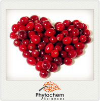 Rich in Antioxidant Cranberry Extract 5% Anthocyanidins