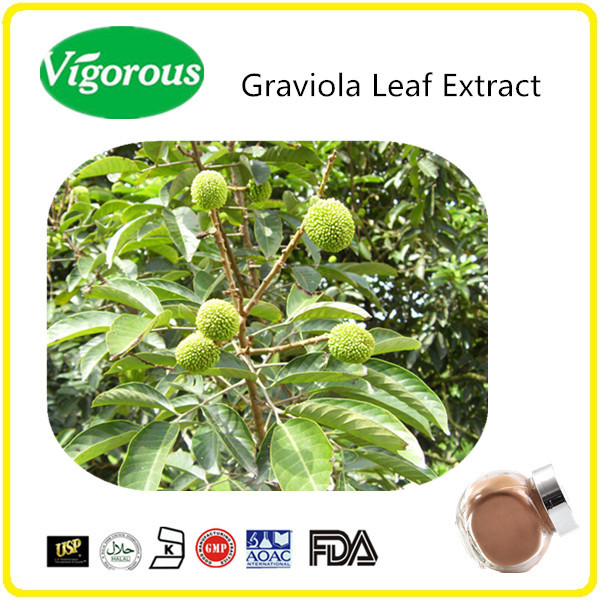 100% Natural Graviola extract/graviola fruit/Graviola extract powder for cancer