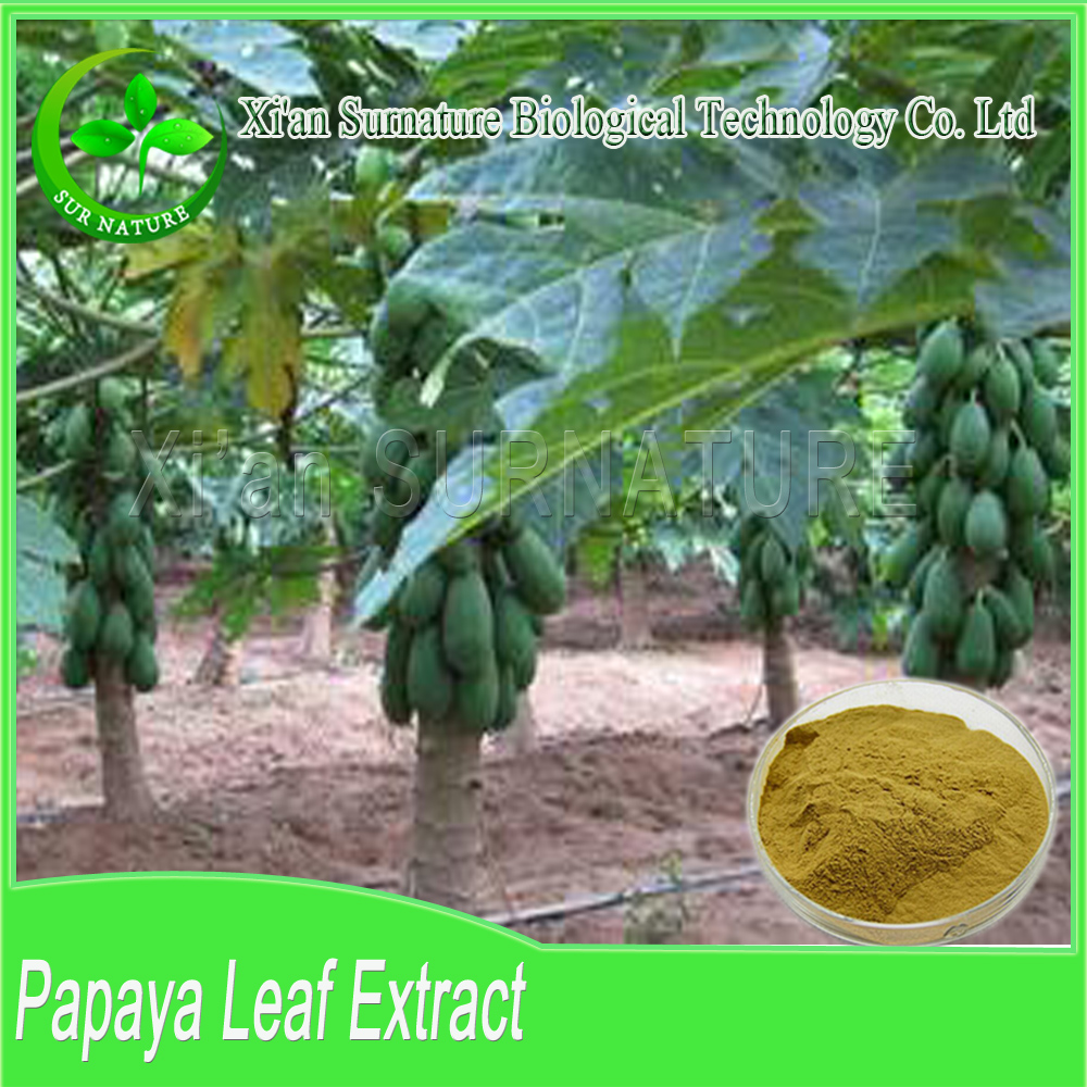 Factory supply high quality papaya leaf extract powder