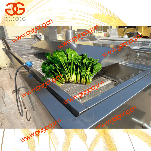 Stainless Steel Steam Blanching Machine for Spinach