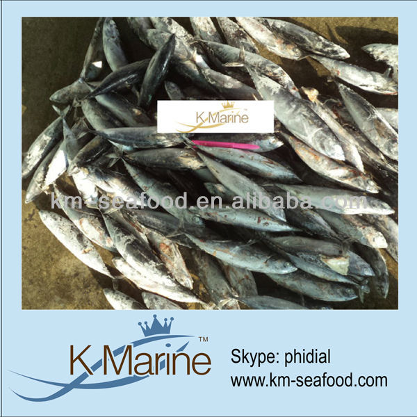Hot Selling Fat Content 16%-18% Bonito and Tuna For Canned