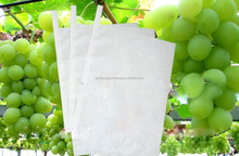 Sri Lanka,Chile, Malaysia Imported Made In China Grape Protection Growing Paper Bag
