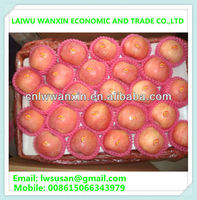 export big quantity fuji apple shandong origin competitive price