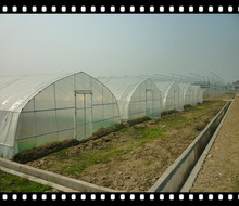 polytunnel/greenhouse