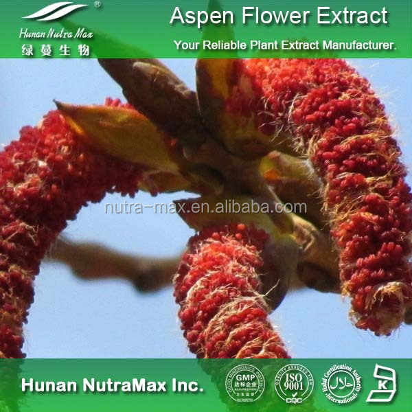 Populus tomentosa Carr Extract,Populus tomentosa Carr Extract Powder,Populus tomentosa Carr P.E.