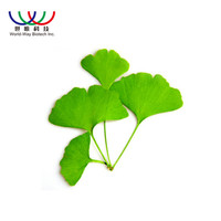 herbal extract ginkgo biloba leaves extract with best price
