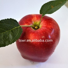 china high quality fruit fresh apple fruit with lowest price