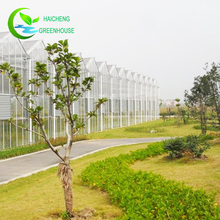 Used Commercial multi span Greenhouses Agricultural of glass