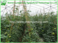 Used Commercial Greenhouse