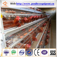 Agricultural Farm Greenhouse Poultry Farming