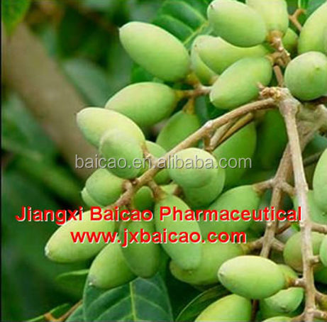 best price wholesale pure natural essential oil olive oil price