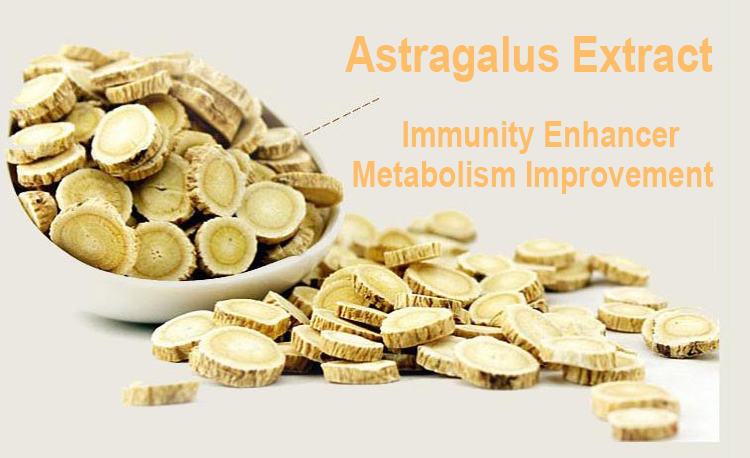 Trade Assurance Astragalus Root P.E. With Good Price