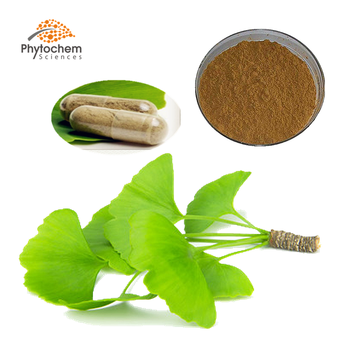 gmp dried leaves leaf gingko powder capsules pure Flavone Glycosides usp grade ginkgo biloba extract