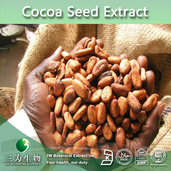 Top Quality Cocoa Seed Extract,Factory Supply Theobromine 10%20% plant extract(HPLC), Theobroma cacao L.
