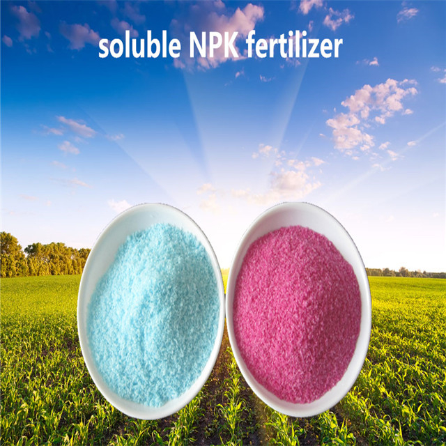 19-19-19 soluble NPK fertilizer
