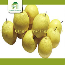 fresh fruit chinese sweet pear