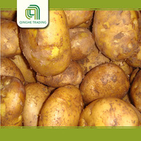 wholesale bulk potato specifications with low price