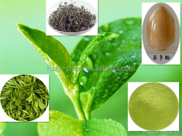 5:1 and 10:1 High Quality Concentrated Herbal Extract Tea Polyphenols,Polyphenols,Green Tea, Lu Cha Extract