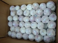 2015 fresh garlic cold stock china white garlic good quality good price
