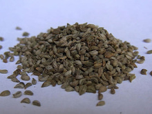 parsley seed