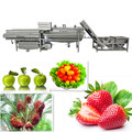 strawberry washing line fruit washer Fruit rinsing machine Food Machinery from Colead