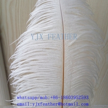 18-20inch wholesale ostrich feather