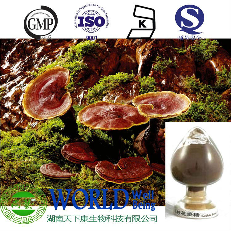Ganoderma lucidum powder active ingredients ganoderic acid