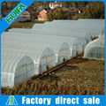Film Cover Material and Single Layer commercial polytunnel greenhouse with vent system