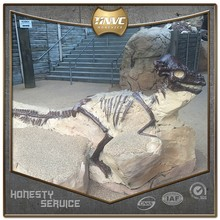 China manufacturer professional realistic dinosaur fossil model