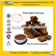 Herbal Extract Pine Bark P.E. from GMP Manufacturer 95% Proanthocyanidins