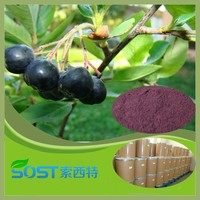 china wholesale hot new products for 2015 fruit powder acai berry wholesale