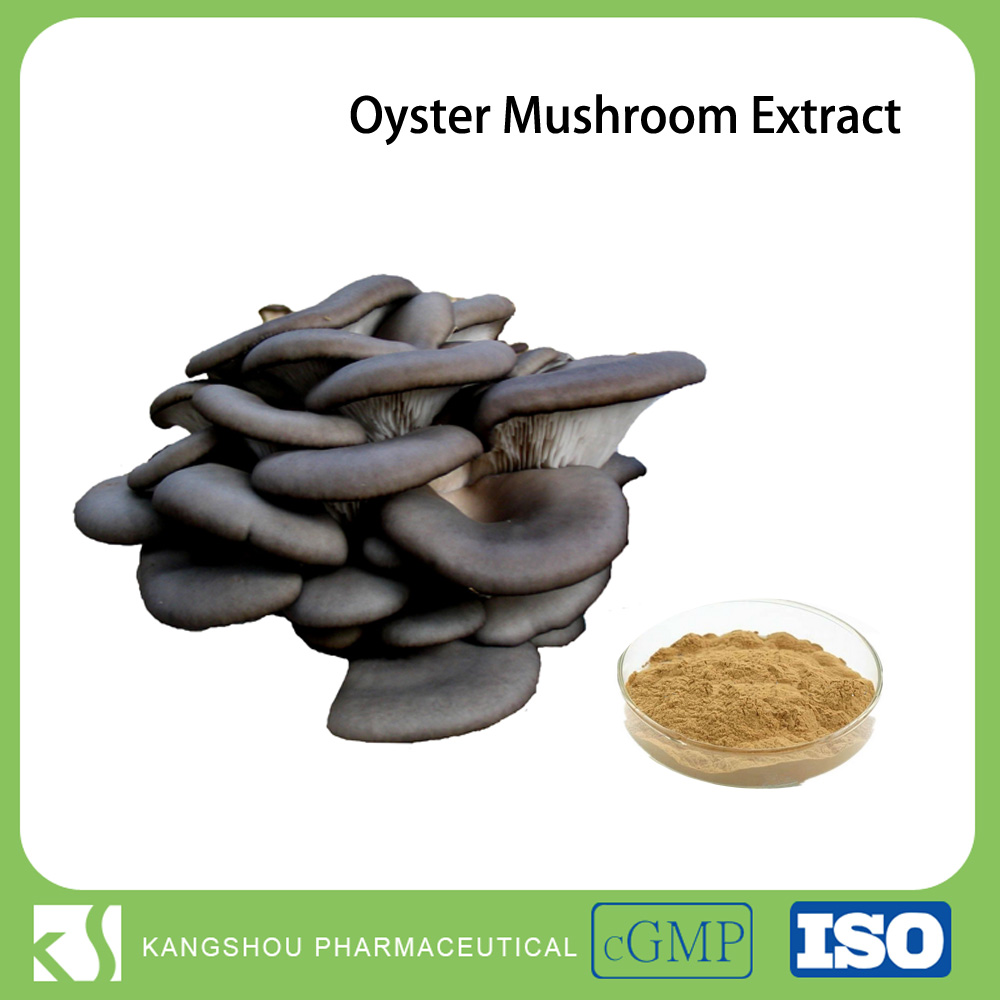 GMP Factory Polysaccharides Powder Pure natural oyster mushroom extract
