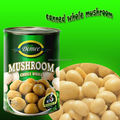 Canned Whole Mushrooms With Delicious Taste