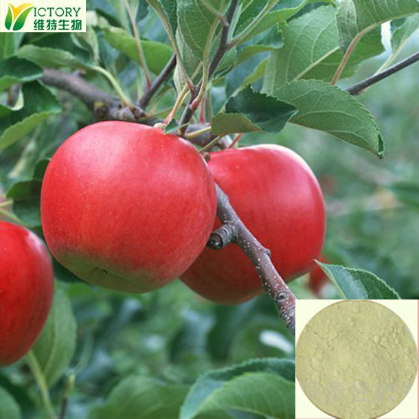 apple root extract/ apple extract phloridzin