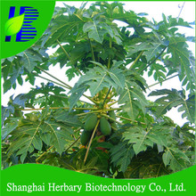 2017 Hot sale red lady papaya seeds for planting