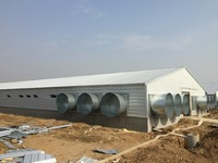 Design High quality Automatic chicken farm broiler poultry shed design