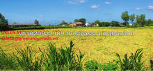 LARGEST RICE MANUFACTURE FROM VIETNAM