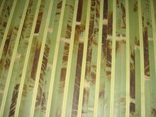 bamboo wallcovering