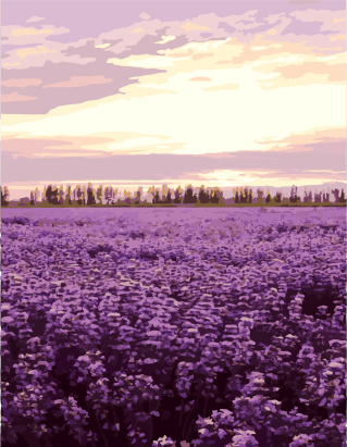 GX7942 flower lavender oil painting picture by numbers for wall decor