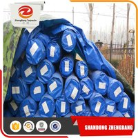 Transparent Plastic sheet Waterproof PE Tarpaulin roll for Agriculture