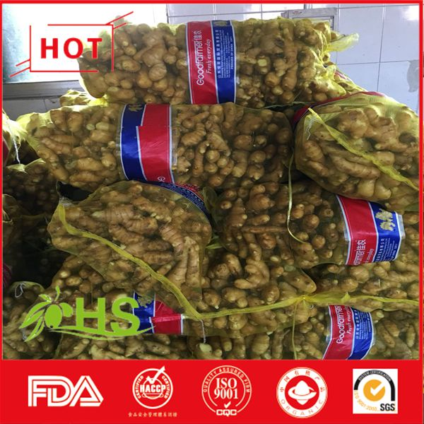 Fresh ginger of wholesale price