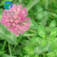Top Quality Pure Natural Green Healthy Bulk Red Clover Extract Powder/ Best Iso-flavone