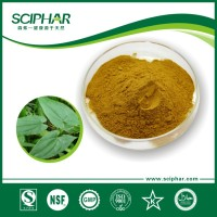 supply men health care Epimedium Extract Powder 10.0~20.0% Icariin Test by HPLC