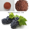 Organic Extract Beauty Grape Seed Extract Proanthocyanin Powder