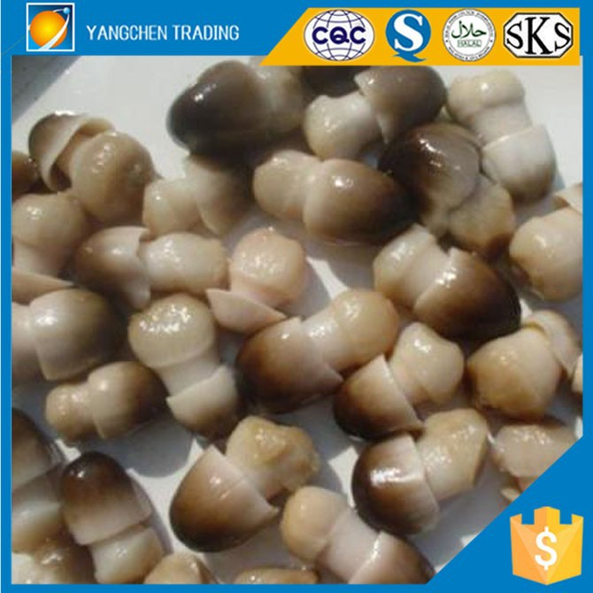 Fresh champignon of canned straw mushroom in tins