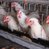 Excellent quality broiler chicken layers cage for hen house