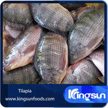 Black Red Nile Frozen Tilapia Fish For Sale