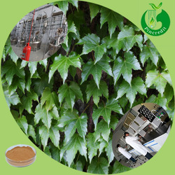 Natural ivy leaf extract/Hederacoside C/hedera helix extract